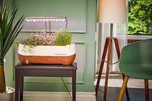 Tageslichtlampe für Pflanzen hilft beim Wachstum